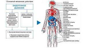 эндогенное дыхание медицина третьего тысячелетия